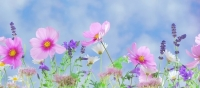 Fée - Faire Ecole Ensemble